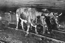 Hommes et animaux dans les mines ...