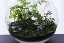 Terrarium Love / For the love of Terrariums / by Nesha Shaw