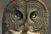 owl / birds