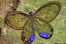 Lepidóptera