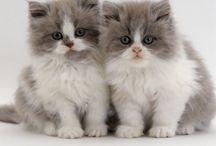 I love cats...