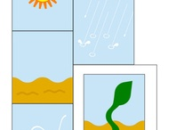 School - Plants/Jack and the Beanstalk