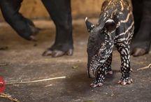 Baby Zoo Animals / Baby Zoo animals that make us smile.