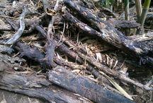 Kayu pohon
