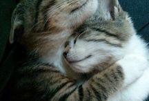 кошки ))