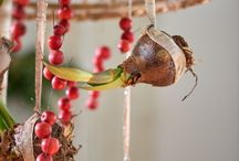 Bloemen / Amaryllisbollen