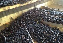 LXV Winemaking