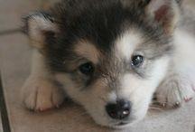 Doggy♥