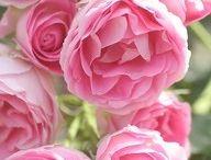 ❀ I'm in the garden ❀ / by ༺ಌ :: Scarlet Blush :: ಌ༻