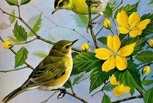 Ptg birds 2