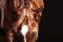 I LOVE HORSES, HORSES, HORSES