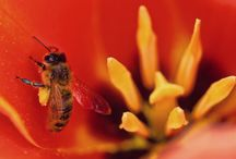 Insecticides, pesticides and honeybees / How toxic insecticides and pesticides actually are to bees? Find out here http://insectcop.net/insecticide-pesticides-and-honeybees/