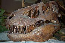 Tiranosaurio REX / Imágenes sobre el Tiranosaurio REX, ¡qué miedo!