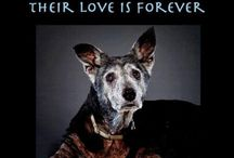 Pet Adoption Tips and information / Find your new best friend at your local shelter! Change the world, one dog or cat at a time!