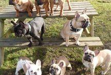 Hunde ❤️