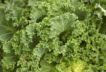 Kale / Store your Kale in a plastic bag or tupperware type container in your refrigerator.  This way, your farm fresh kale could keep for 4-6 weeks, just peel off the leaves you want and keep the rest enclosed in plastic to ensure a humid environment.