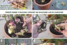 Gardeniery