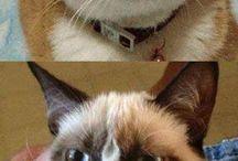 grup cat