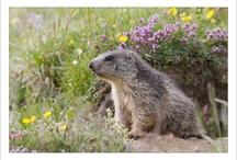 Fauna around La Norma / Beautifull wildlife