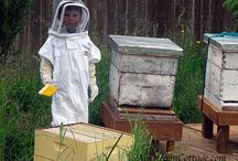 Beekeeping Buzz / by Laura Dinkins