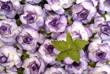 Kwiaty z papier