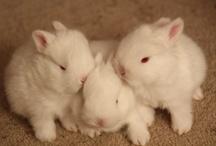 Too Cute: Bunnies