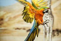 Mijn favoriete dieren / Wat zijn ze toch mooi......