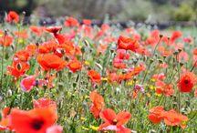 Bloemen Tarragona / Bloemen groot en klein, kleurig en fijn, winter- en zomerbloeiers in de Catalaanse provincie Tarragona.