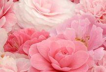Pink...So Lovely