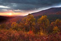 A Blaze of Autumn Glory / Virginia native plants really shine in the fall!