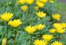 伊豆四季の花公園 / 2010年11月「伊豆海洋公園」から「伊豆四季の花公園」に改称し四季折々の花々が楽しめます。バス停は「海洋公園」です。 http://izushikinohana.com/