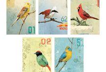 Birds / by Elizabeth