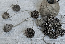 PineCones~~~~~ / by Diane Brandes