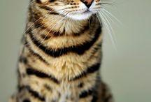 Kočičí zákoutí