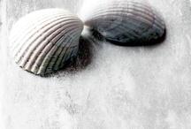coastal imagers