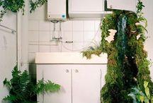 home&plants