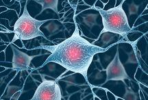 Possível fotos p trabalho de celulas tronco
