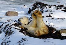 Polar Bear Adventures