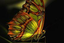 Motýli, vážky a brouci