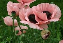 цветы живые и прекрасные