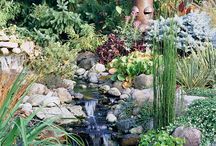 Pond, Pool,& Water Features / by Dena Major