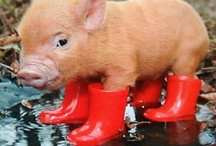 This little piggy went out in the rain