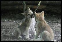Tiere / Die bunte Welt der Tiere