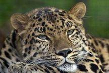 10 animales en peligro de extinciòn