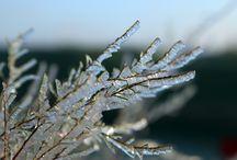 Winter / Winterfotografie