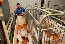 Animal Health & Science / New research and fun and important information about animal health