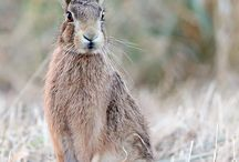 Animals / by Jim Barron
