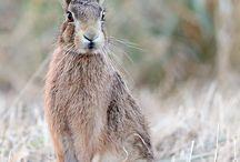 Animals / by Jim Barron