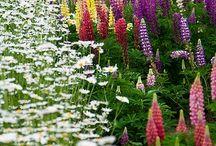 Kompozycje kwiatowe na rabatach