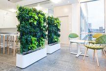 Green Walls - Dividers